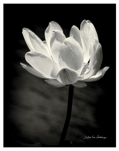 Lotus Flower X Paper Art Asian Prints And Posters By Global