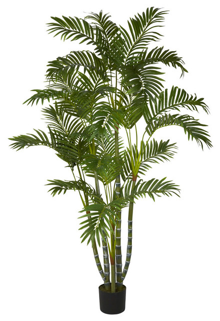 5&x27; Areca Silk Tree, Green.