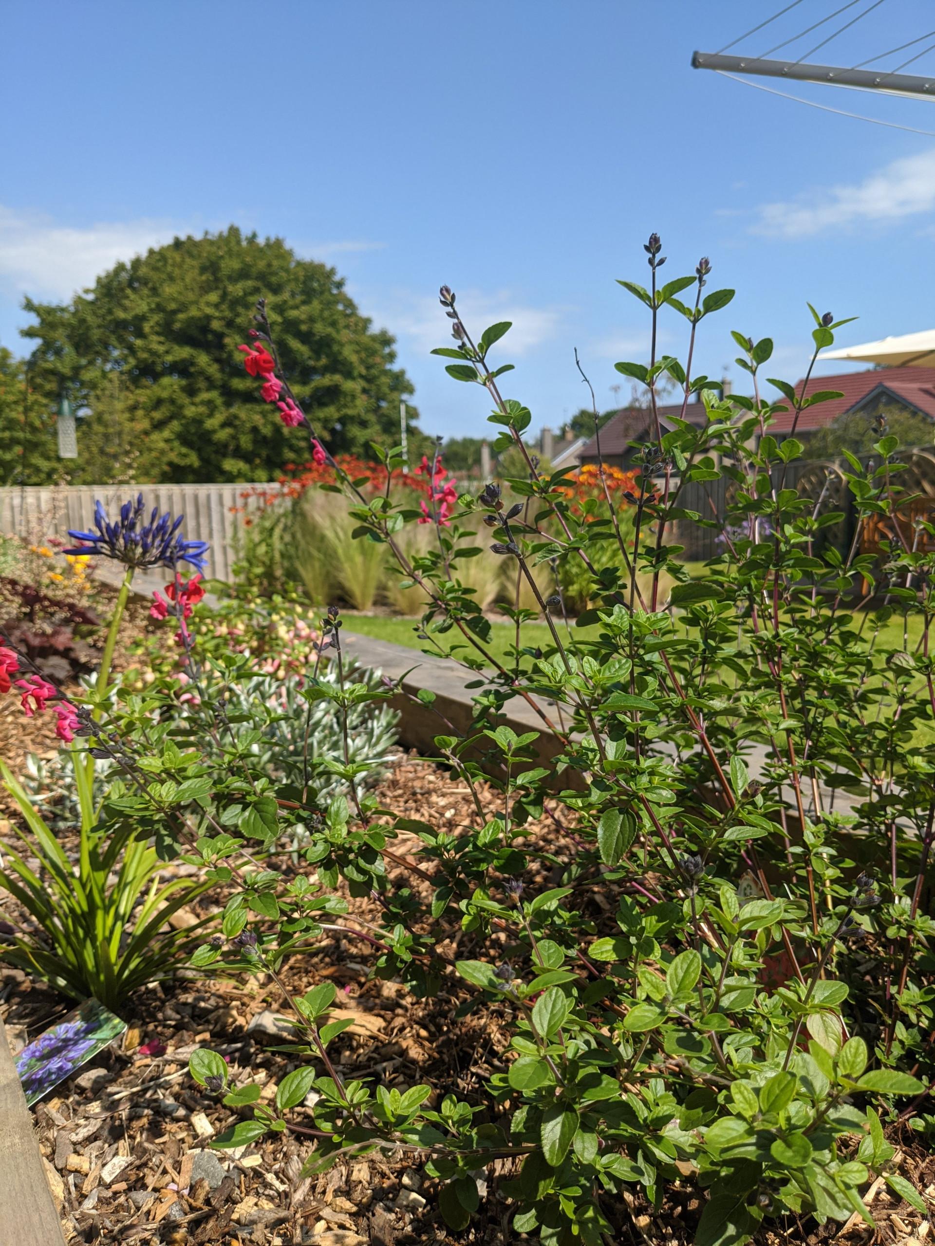Turner Avenue Garden Renovation