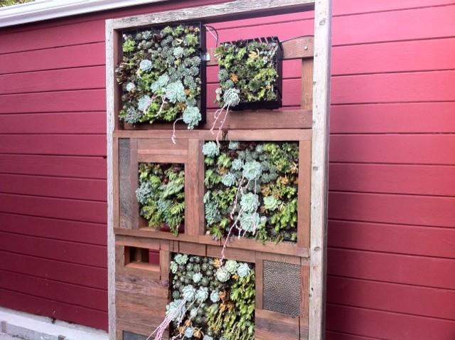 Succulent Wall Panel Contemporary Garden