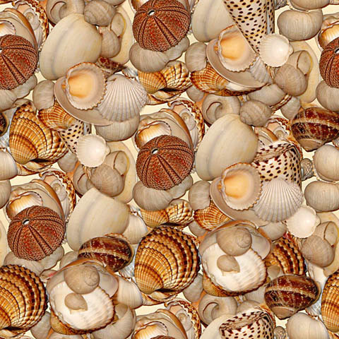 Seashell Medley Shelf Paper Drawer Liner, 120x12, Laminated Vinyl