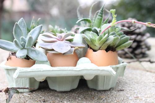 DIY: Decoration de Pâques avec des succulentes