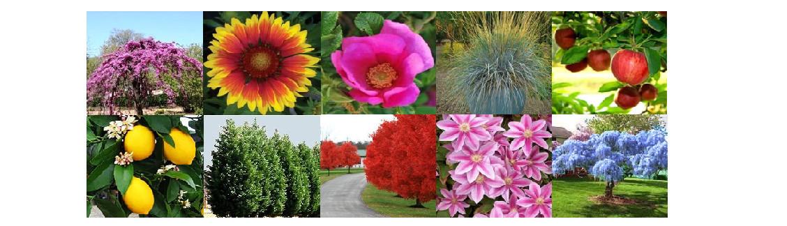 Nature Hills Nursery Omaha Ne Us 68152