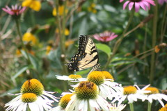 Central Plains Gardener's August Checklist