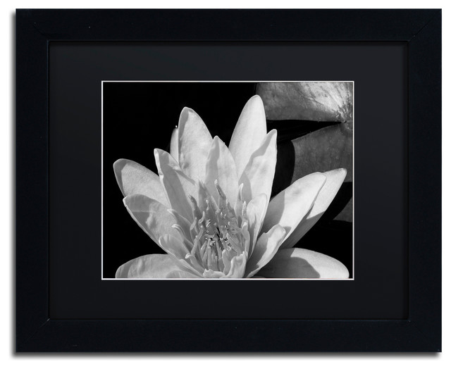 Kurt Shaffer Water Lily In Black And White Matted Framed Art Traditional Prints And Posters By Trademark Global