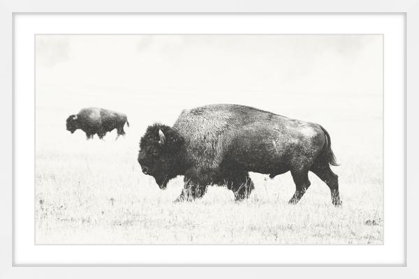 """buffalo Pair"" Framed Painting Print, 36""x24""."