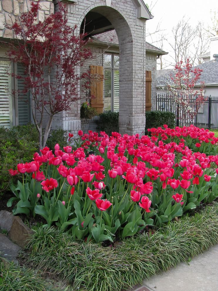 BB Tulips