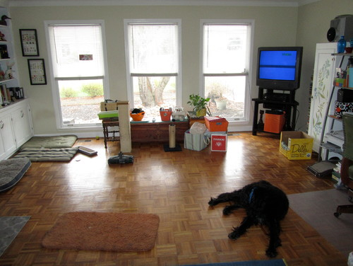 Same 3 Window Look On Opposite Wall Awesome Dog In Middle Of Room Is Clearly Embarrassed How Cluttered Yet Without Furniture And Sad This Next