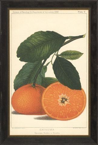 """Satsuma Orange And Lemon Framed Art Print, 30.825""""x44.325""""."""