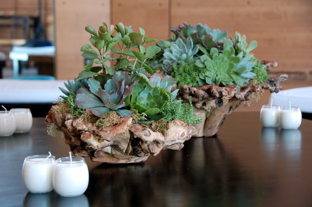 Succulent Arrangements Contemporary Indoor Pots And