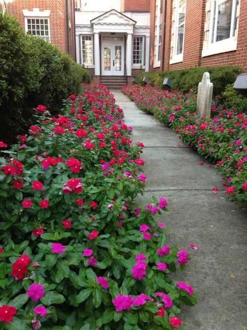 Annual Flower Beds On Commercial Properties  Coleus  Vinca
