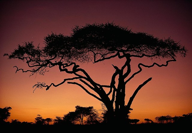 Magic murals llc tree silhouette in africa wallpaper wall for African sunset wall mural