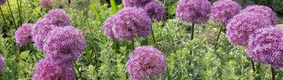 caroline benedict smith garden designer cheshire stockport cheshire uk sk8 7dh