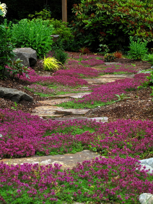 what is the low growing ground cover with the purple flowers?, Natural flower