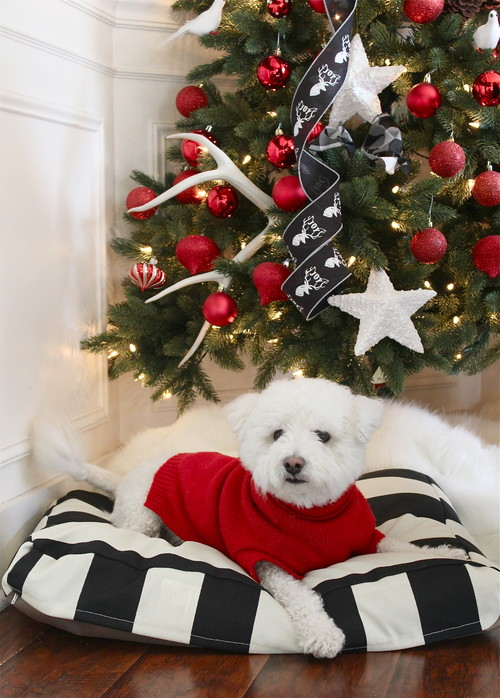 Holiday Decor Ideas for Dog Lovers - White dog laying on black and white dog bed with christmas tree in the background