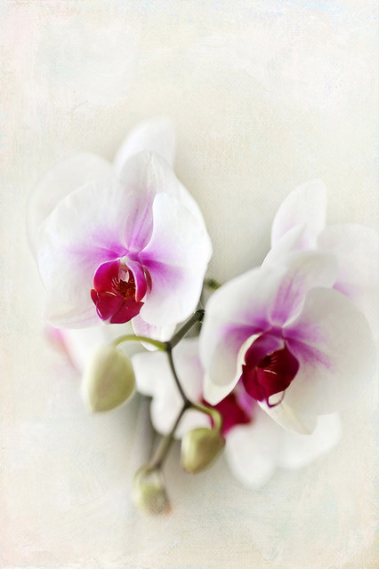 """Marmont Hill MH-SYLCOO-12-C-60 60"""" x 40"""" - """"Orchids"""" Frameless Giclee Print on"""