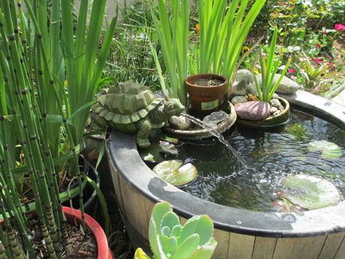 New container water garden fish pond for Container ponds with fish