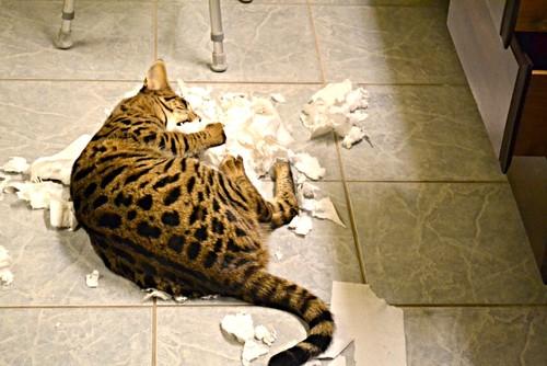 Cat Proof Toilet Paper Holder?