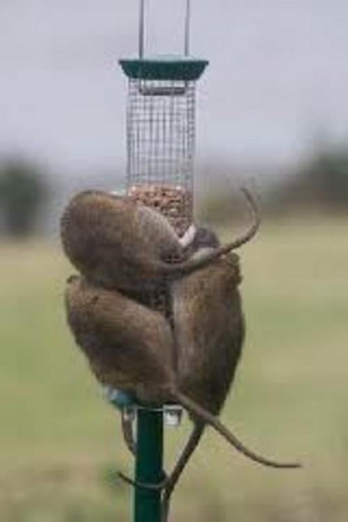 Best Way To Keep Cats Away From Bird Feeders