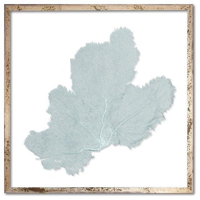 Sea Fan Silver Acid Washed Frame, Blue Haze.