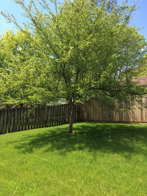 Tree Identification Help