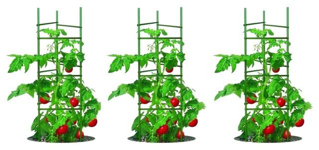 Tomato Plant Cage Climbing Fruit Veggie Garden Trellis, Set Of 3.