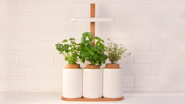lilo sur kickstarter faites pousser des herbes aromatiques simplement scandinave pot et. Black Bedroom Furniture Sets. Home Design Ideas