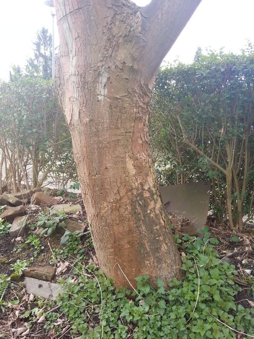 Was Ist Das Für Ein Baum was ist das für ein baum