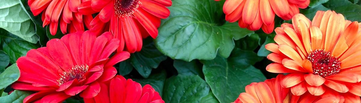 Martin\'s Home & Garden - Murfreesboro, TN, US 37129 - Reviews ...