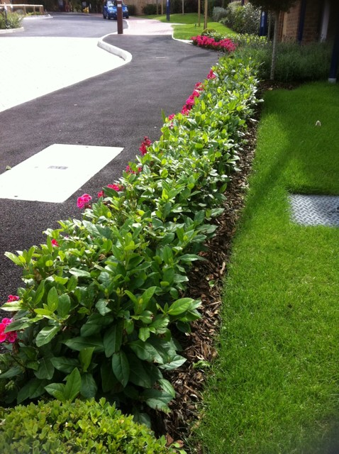 Stepover hedging london for Low bushes for landscaping