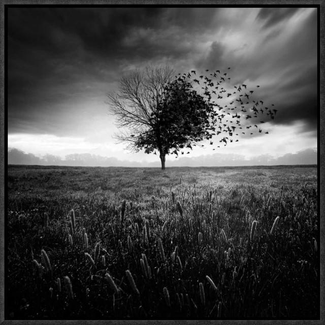 """Illusion DUn Printemps Perdu""  by Sebastien Del Grosso, 17x17"""