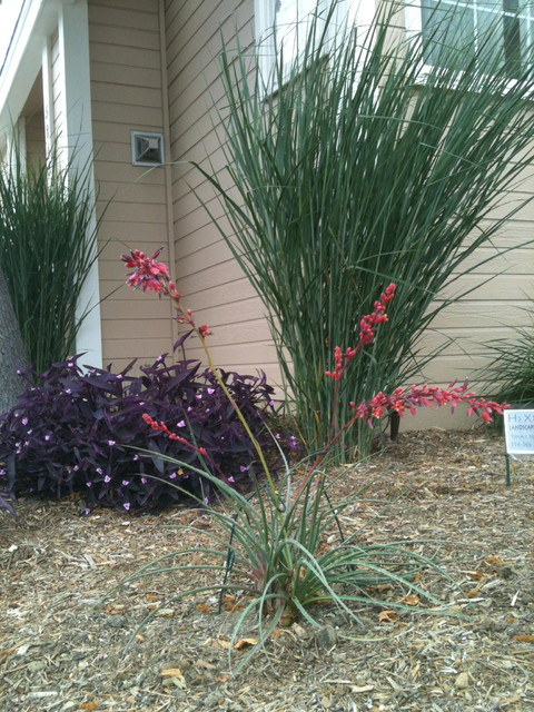 Naples ca low water low maintenance with space between for Low maintenance potted plants