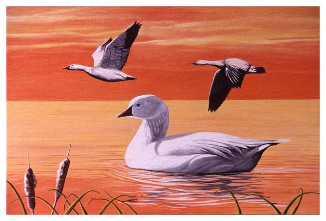 """Mike Bennett Snow Geese Art Print, 24""""x36"""""""