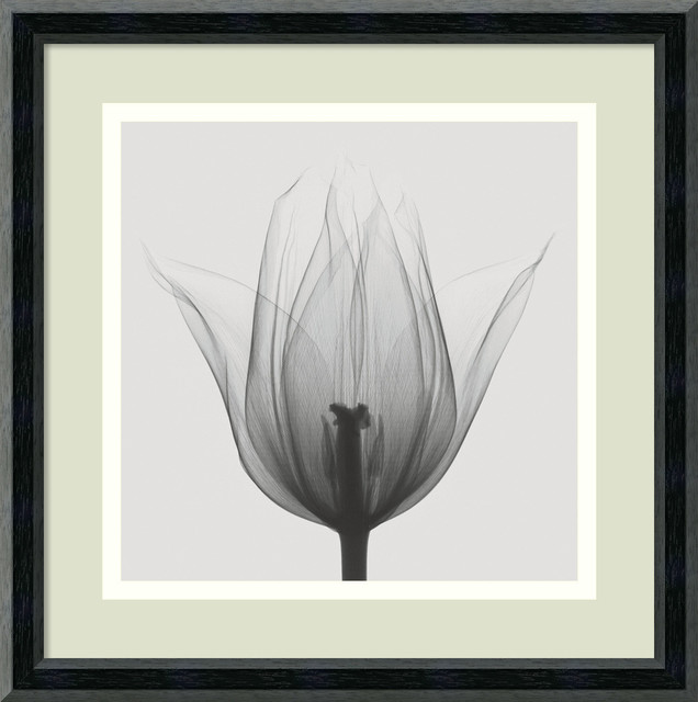 triumph tulip framed art print by steven n meyers 12x12