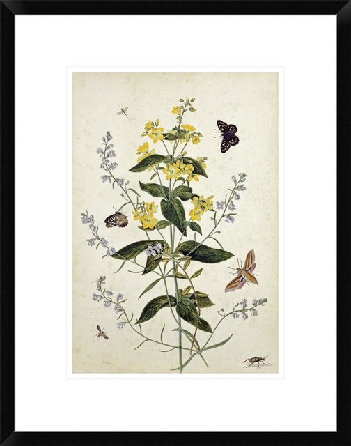 """""""yellow Loosestrife And Other Wild Flowers"""" Artwork, 17"""" X 22""""."""