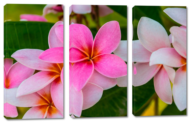 pink plumeria flowers canvas print 3 panel split triptych wall art 30x20 tropical