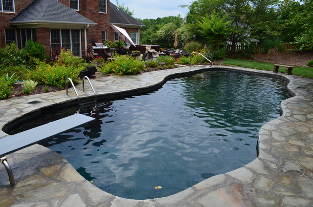 Free Form Gunite Pool - Traditional - Other - by Anchor Pools and ...