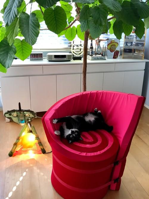 【Houzz】猫と人の幸せな暮らし:イラストレーター石川三千花さん、愛猫ネコゾーと暮らす日々 4番目の画像