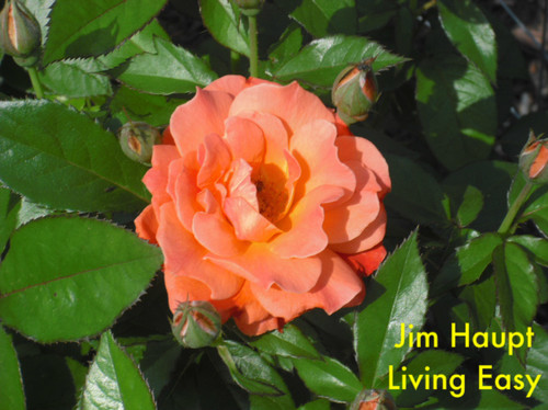 Jim1961 Zone 6a Central Pa.