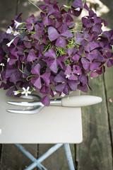 Хотите — верьте: Цветы, приносящие счастье и любовь в дом