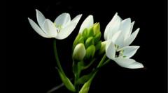 How Do I... Choose High-Impact Flowers for My Garden?