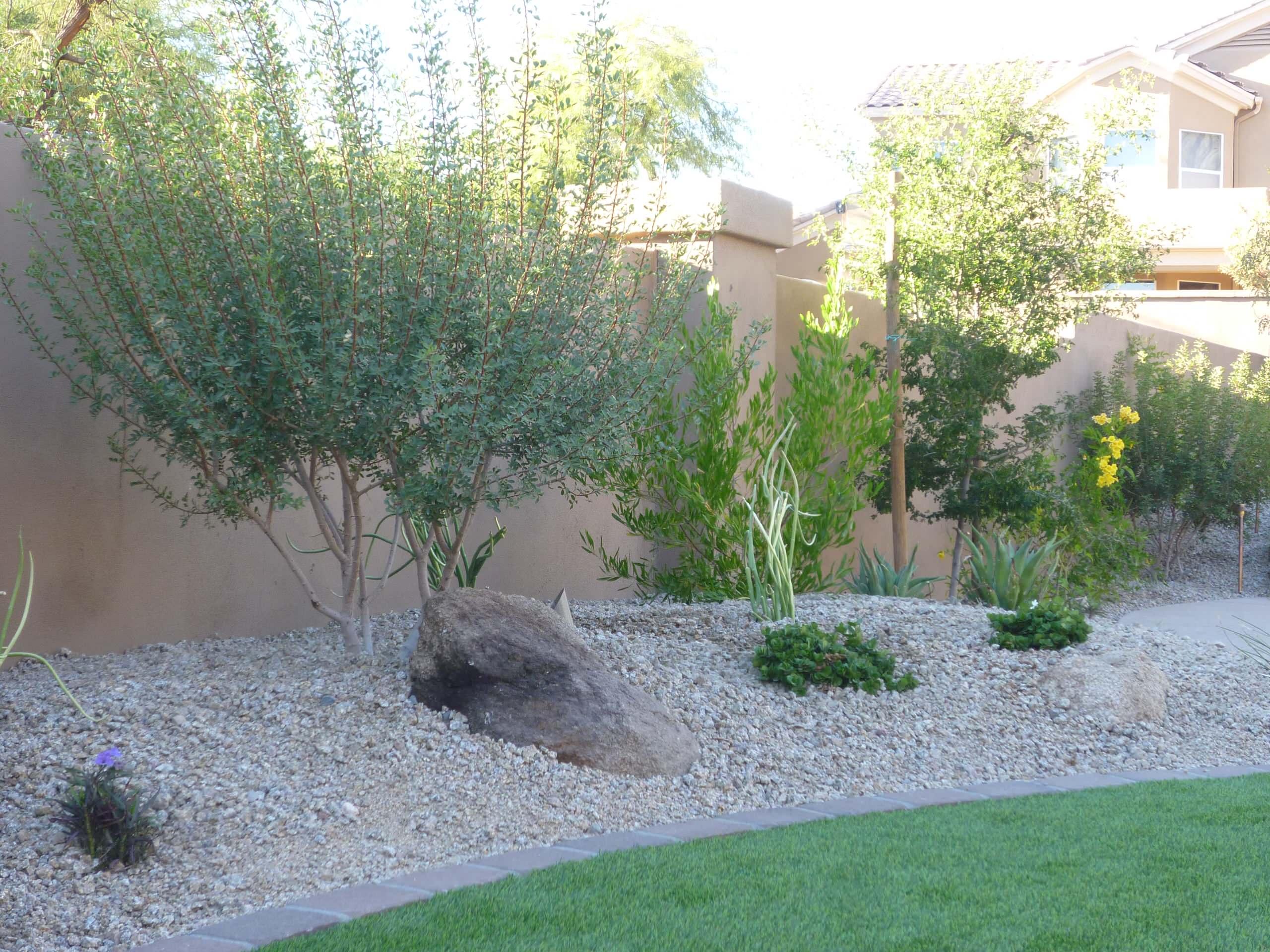 Mastic Tree & Accent Planting