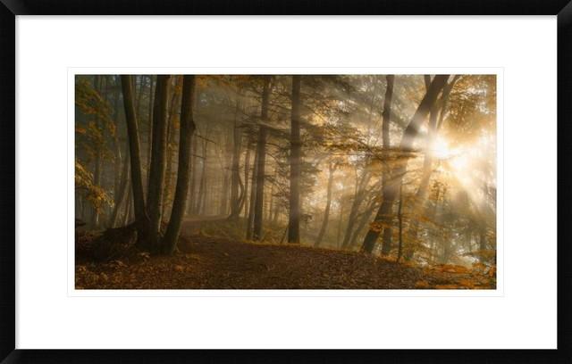 """forest Light"" Artwork, 28""x17.4""."