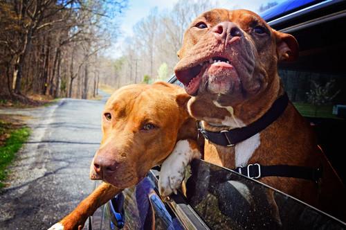 【Houzz】ペットが安全で快適に夏を過ごすためのポイント 13番目の画像