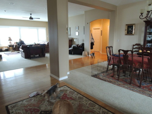 Where To Transition From Hardwood Carpet