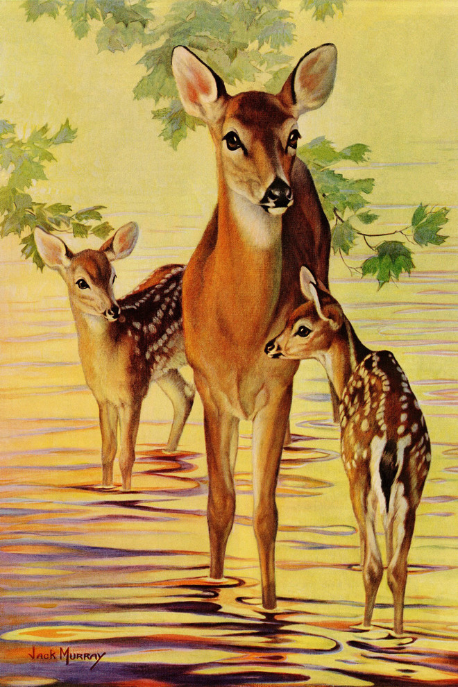 Doe And Fawns Painting Print On Wrapped Canvas Contemporary Prints And Posters By Marmont Hill Houzz