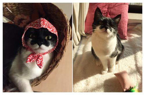 【Houzz】猫と人の幸せな暮らし:「福を招く猫」千葉ちゃんと「猫と建築社」の日常 3番目の画像