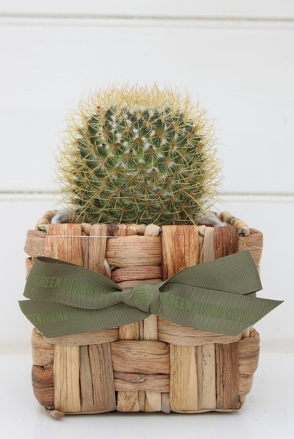 Send a cactus plant gift contemporary plants by for Indoor decorative live plants
