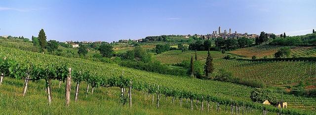 Vineyards And Medieval Tuscany Italy Wallpaper Wall Mural Self Adhesive