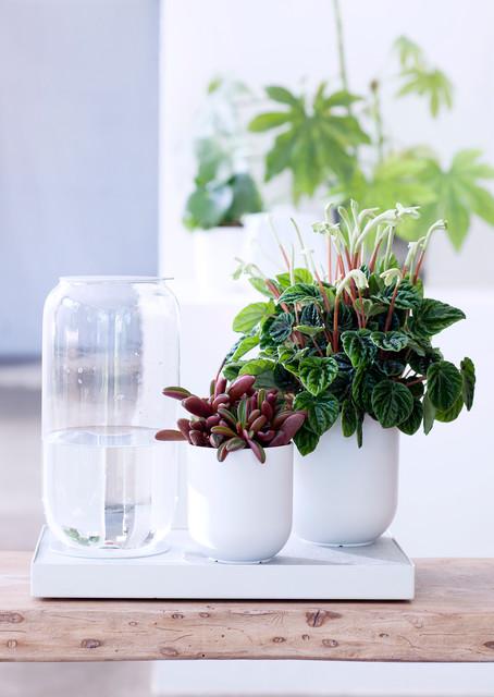 Zimmerpflanzen berlin von - Zimmerpflanzen berlin ...